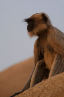 Sad-looking-langur-monkey-sitting-on-ruins-at-hampi