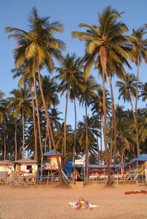 Palm Lined Beach Palolem by serenityphotography