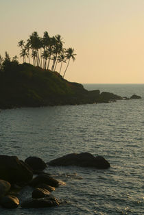 Palm Trees on the Point Palolem by serenityphotography
