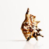 mussel 2 by Erinç Baydemir