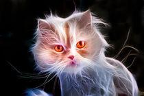 Cat by Graham Prentice