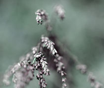 Pflanze by Jens Berger