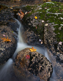 Woodland Stream in Autumn by Debra  Carr Brox