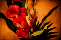 Orchid Art von Milena Ilieva