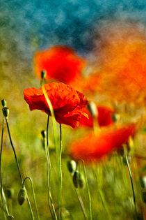 Rote Mohnblumen von Nailia Schwarz
