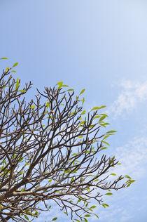vivid leaves von huiwen chen
