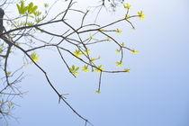 leaf/blatt by huiwen chen