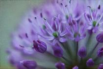 Blüten im Wind von Heidi Bollich