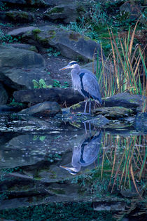 695af-heron-reflection-971506-001-rv-3-1v-5