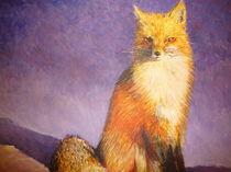 arctic fox von karumen