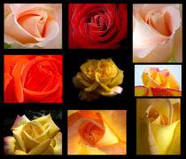 The bouquet of roses von Odon Czintos