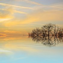 Heavenly Branches by sharon lisa clarke