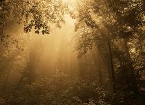 Light forest von Odon Czintos