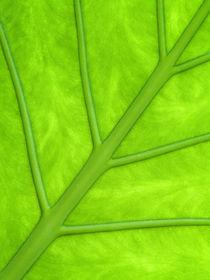 Green leaf by Odon Czintos