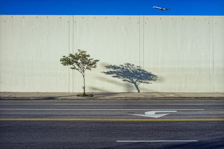 Tree-and-shadow-with-plane-february-15-2012