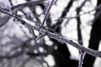 Frost by johney123