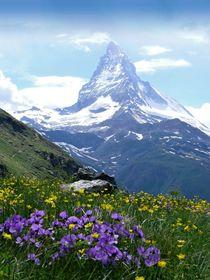 Schweiz-alpen-traumwiese-mit-matterhorn