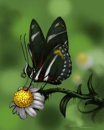 Zebra Heliconian by Danny Silva