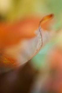 autumn leaf by studioflara