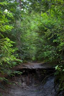 forest von studioflara