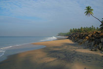 Palm-tree-over-black-beach-varkala