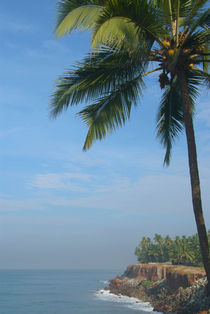 Palm Trees on the Cliff Varkala by serenityphotography