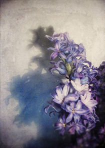 Hyacinth by Sybille Sterk