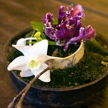 Orchidee-teehaus