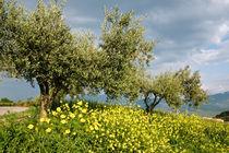 PRIMAVERA - CACCAMO - Sicily by captainsilva