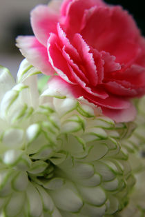 Pink and White Flowers by Elizabeth  Wilson