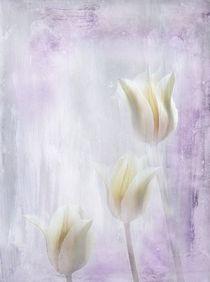 Drei-tulpen11-a