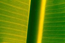 Banane von Jens Uhlenbusch
