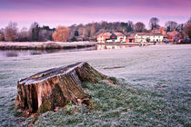 Tree Stump at dawn by Stephen Mole