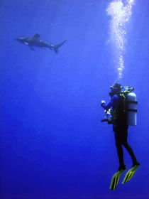 Watching-the-oceanic-whitetip-03