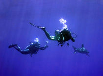 Photographing an Oceanic Whitetip by serenityphotography
