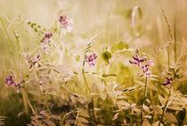 sommerwiese - summer meadow von augenwerk