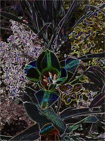 Blumenblüte by Karel Plechac