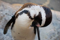 Pruning Penguin von bibi-photo-hunter