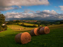 Painscastle Hay Bales by Nigel Forster