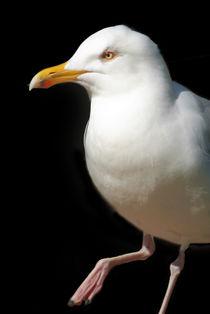 Dancing-seagull