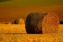 A Roll in the Hay by serenityphotography