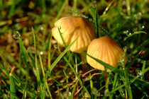 Two-toadstools