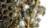 Bee Hive macro by Gelu Timoficiuc