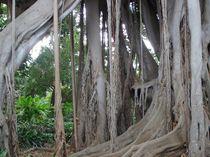 Lianenbaum von Corinna Schumann