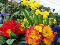 Frühling im Garten by Eugen Bill