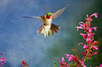 Hummingbird Flight von Barbara Magnuson & Larry Kimball
