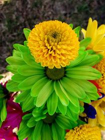 Fleur-verte-sm