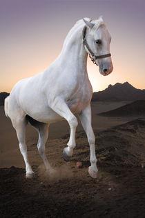 White horse in the desert by Tanja Krstevska