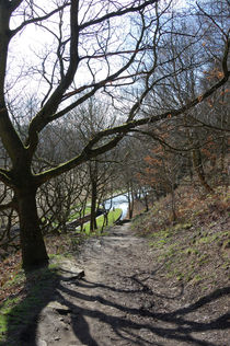 Woodland View - Huddersfield Narrow Canal by Paul Oakes
