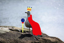King Seagull by Ashley Robertson